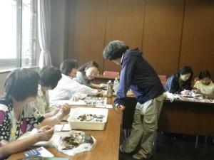 20140517江ノ島 砂浜海岸生物調査報告2
