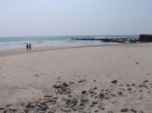 うみひるも No.61より_鹿児島県種子島鉄浜海岸