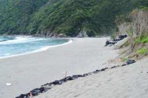 現在の同じ海岸:砂がなくなり後背植生も浸食されている